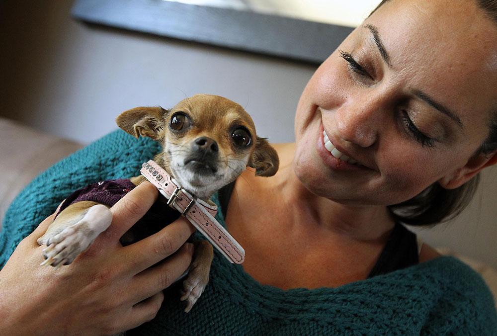 L'addestramento del Chihuahua parte da una prima lezione fondamentale: la scelta del nome