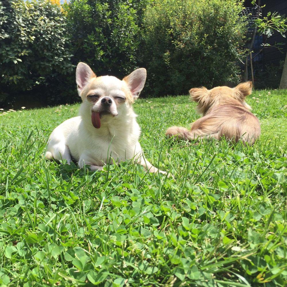aree-per-cani2