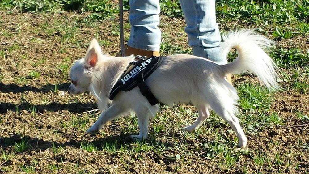 """Il comando """"vieni"""" si usa ogni volta che vogliamo che il nostro cane ci raggiunga. È un comando molto importante e va insegnato come si deve"""