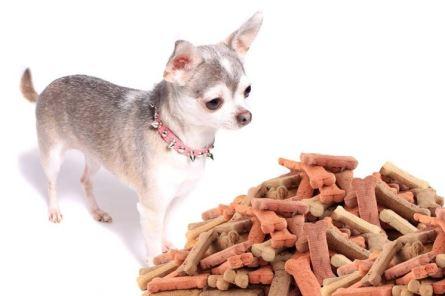 Seguire un alimentazione equilibrata e sana è molto importante per i nostri cani, di tutte le taglie.