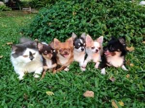 La fase di socializzazione e' un periodo estremamente importante per lo sviluppo del nostro cucciolo